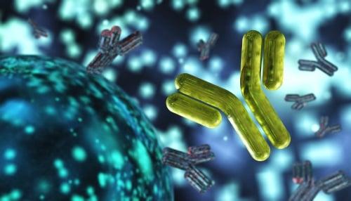 antibody-immunoglobulins